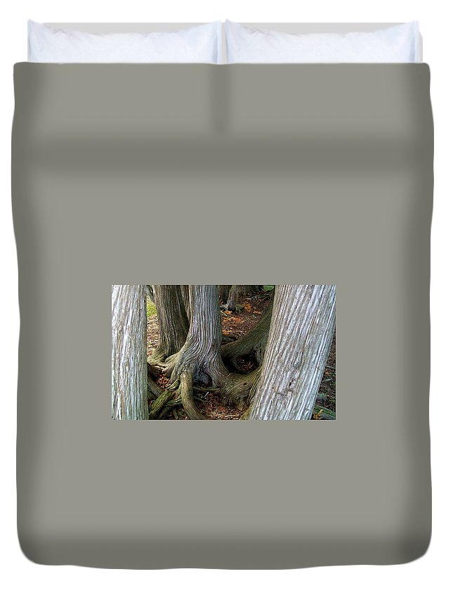 Trees Duvet Cover featuring the photograph Barky Barky Trees by Michelle Calkins