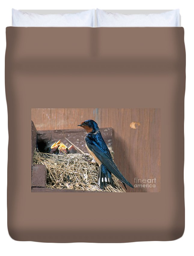 Barn Swallow Duvet Cover featuring the photograph Barn Swallow At Nest by Anthony Mercieca