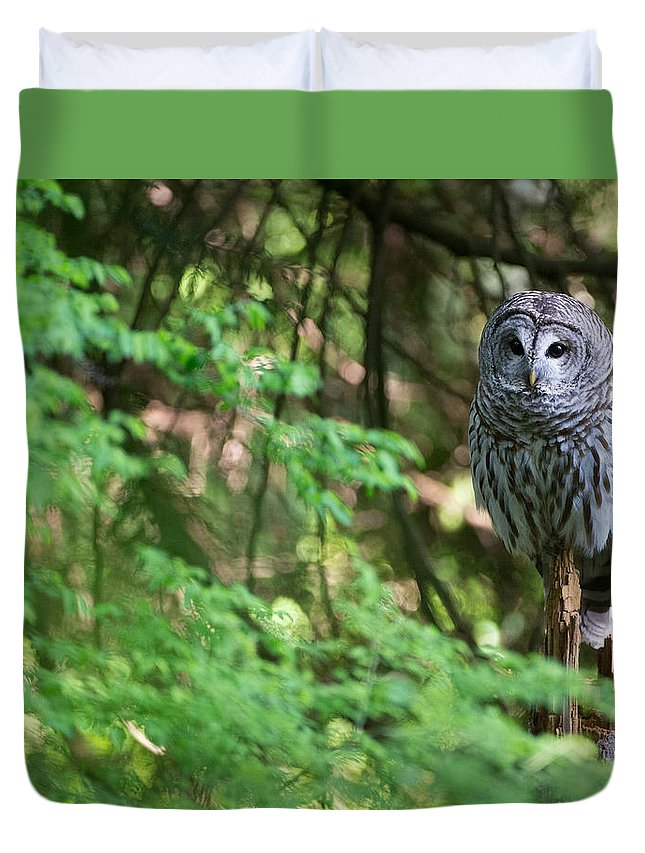 Barred Owl Duvet Cover featuring the photograph Barred Owl In Forest by Max Waugh
