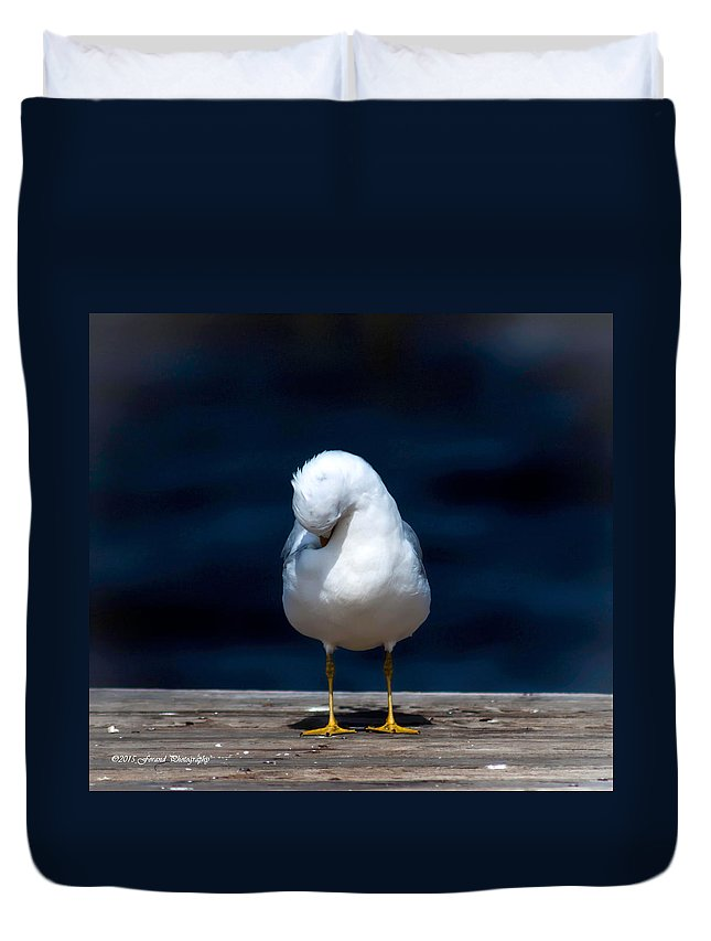 Bashful Seagull Duvet Cover featuring the photograph Bashful Seagull by Debra Forand