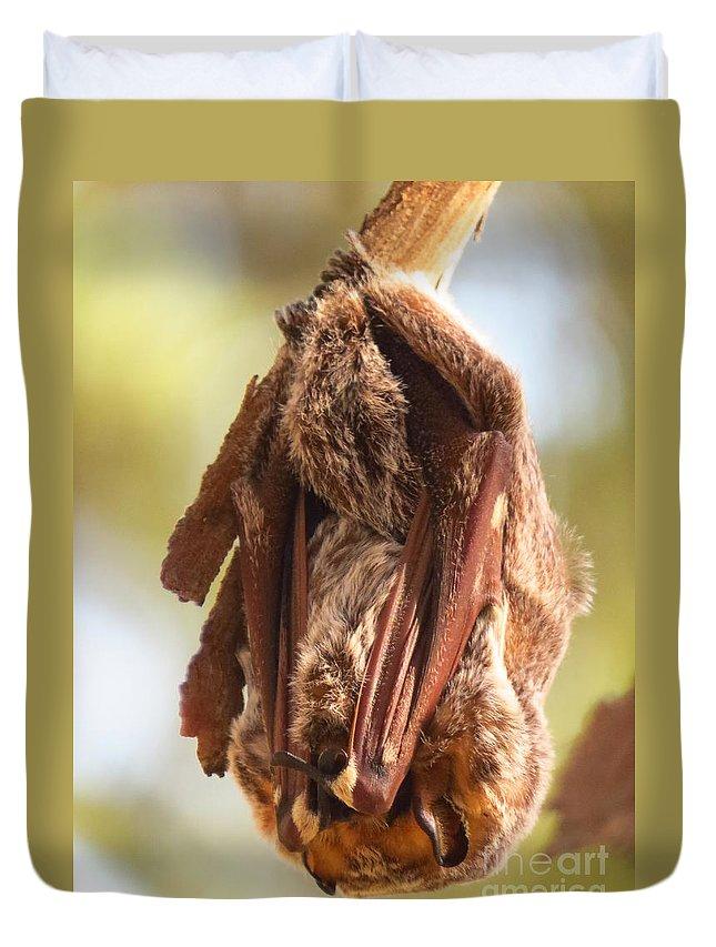 Bat Duvet Cover featuring the photograph Sleeping Bat by Craig Corwin