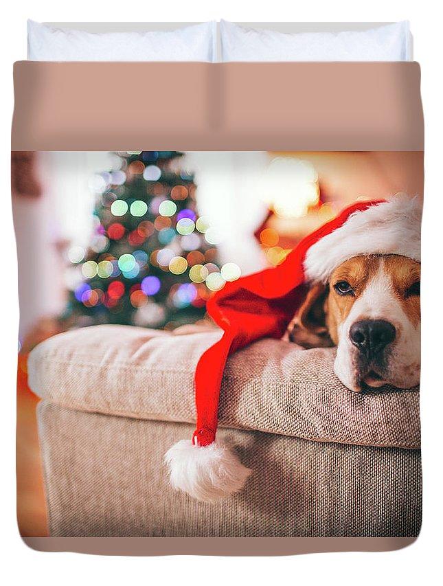 Pets Duvet Cover featuring the photograph Beagle Santa by Aleksandarnakic
