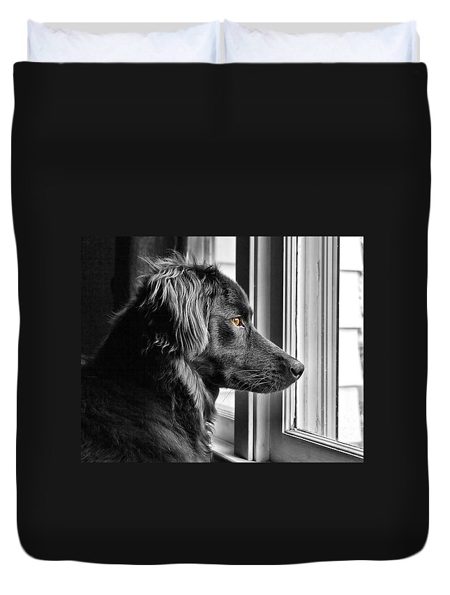 Dog Duvet Cover featuring the photograph Bear At Window by Tim Buisman