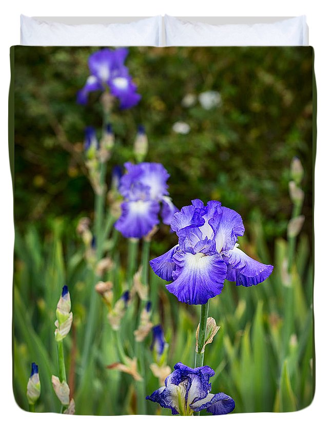 Iris Duvet Cover featuring the photograph Beautiful And Colorful Iris. by Jamie Pham