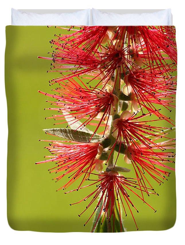 Sabrina Ryan Duvet Cover featuring the photograph Beautiful Bottle Brush Flower by Sabrina L Ryan
