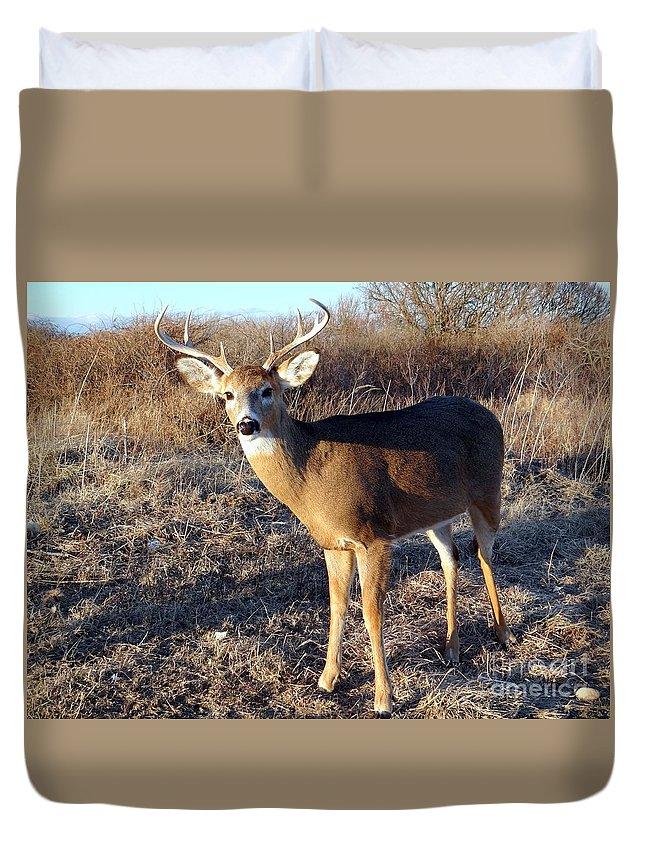 Deer Duvet Cover featuring the photograph Beautiful Buck by Ed Weidman