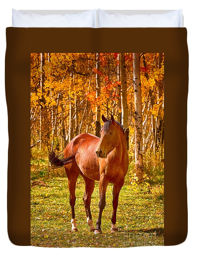 Horse Duvet Cover featuring the photograph Beautiful Horse In The Autumn Aspen Colors by James BO Insogna