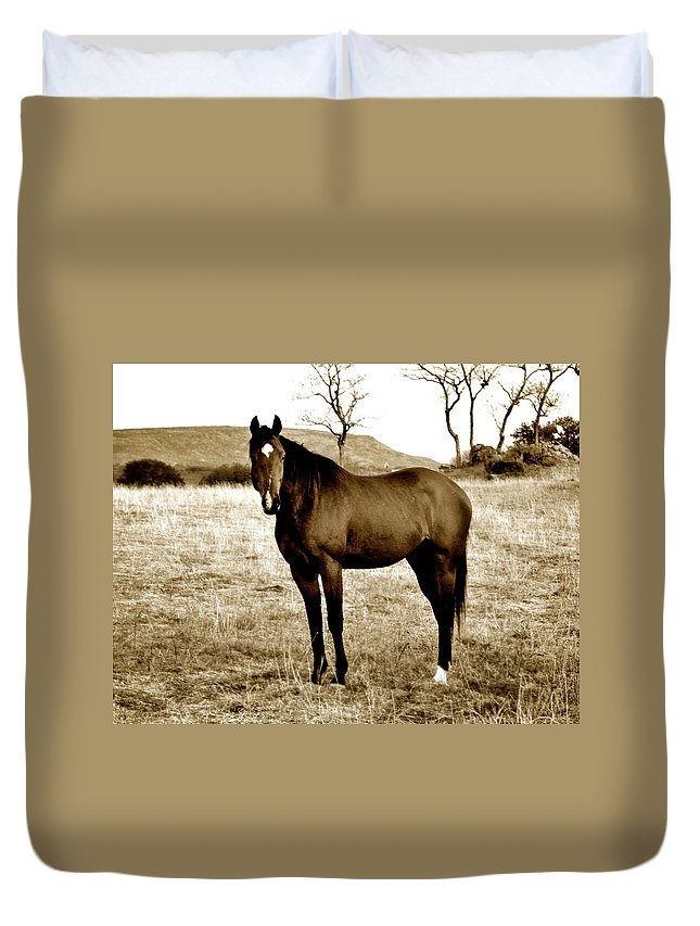Sepia Horse Prints Duvet Cover featuring the photograph Beautiful Horse by Kristina Deane