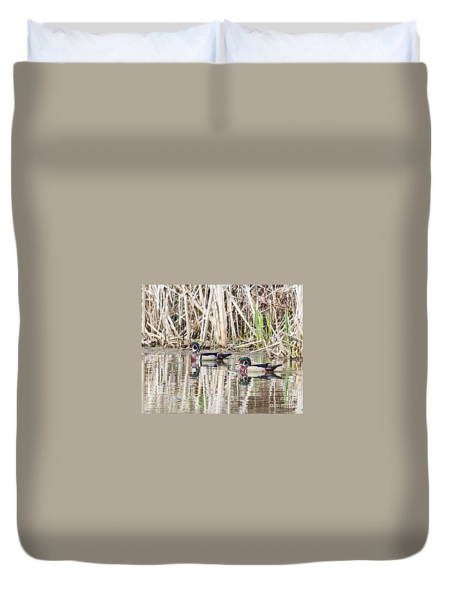 Wood Duck Duvet Cover featuring the photograph Beautiful Pair by Lloyd Alexander