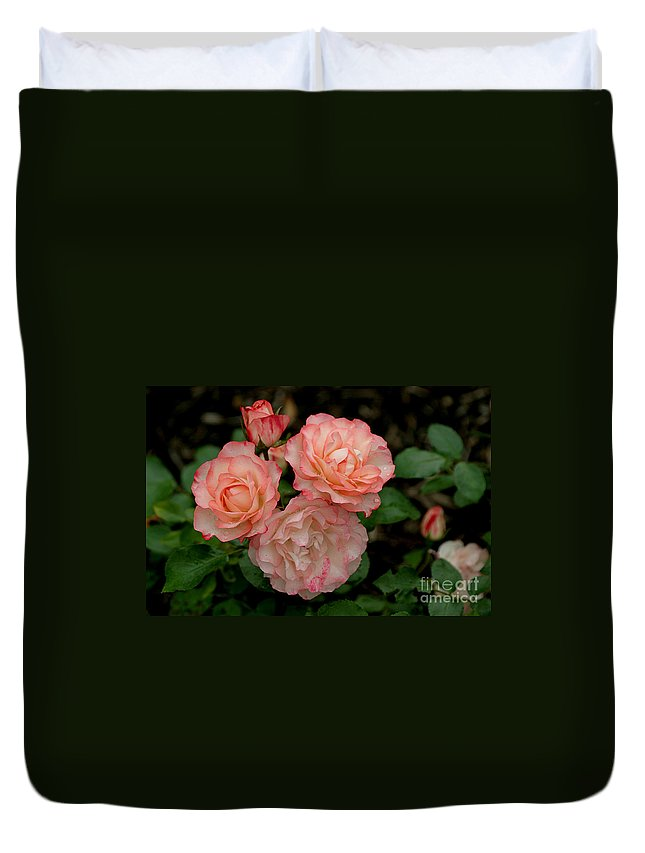 Roses Duvet Cover featuring the photograph Beautiful Peach Roses by Living Color Photography Lorraine Lynch