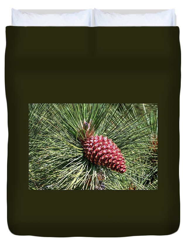 Pine Duvet Cover featuring the photograph Beautiful Pine by Diego Re
