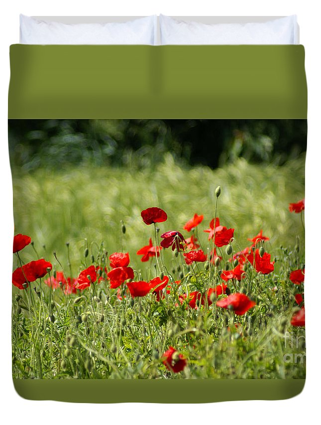 Poppies Duvet Cover featuring the photograph Beautiful Poppies 1 by Carol Lynch