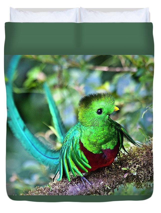 Bird Duvet Cover featuring the photograph Beautiful Quetzal 5 by Heiko Koehrer-Wagner