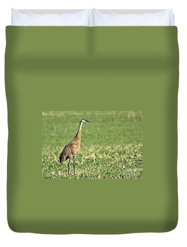 Sandhill Cranes Duvet Cover featuring the photograph Beautiful Sandhill Crane by Cheryl Baxter