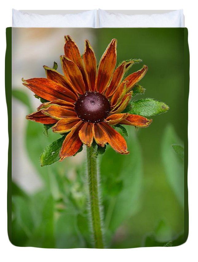 Brown Flower Duvet Cover featuring the photograph Beautiful Shades Of Brown by Patricia Twardzik