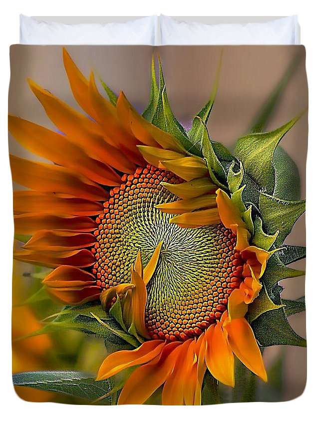 John+kolenberg Duvet Cover featuring the photograph Beautiful Sunflower by John Kolenberg