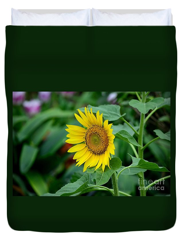Flower Duvet Cover featuring the photograph Beautiful Yellow Sunflower In Full Bloom by Imran Ahmed