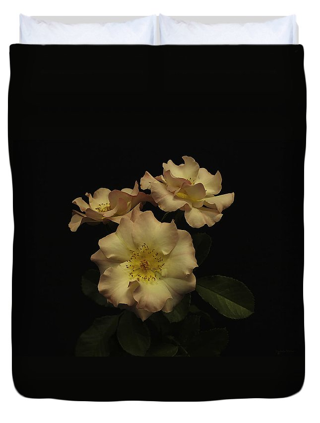 Roses Duvet Cover featuring the photograph Beauty In Three by Lucinda Walter