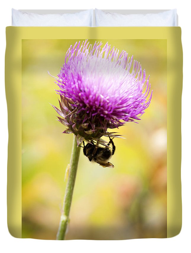 Bee Duvet Cover featuring the photograph Bee And Thistle by Marilyn Hunt
