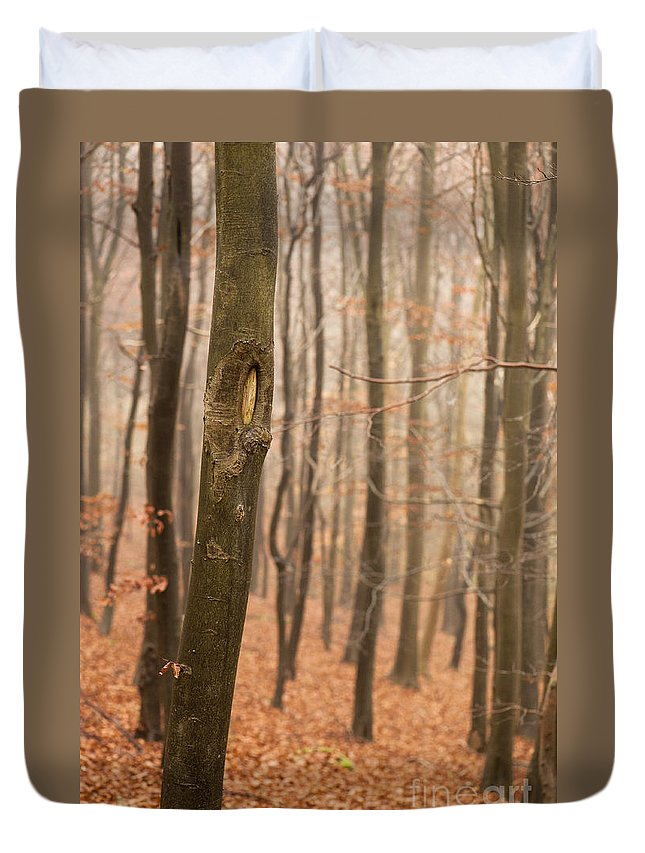 Atmospheric Duvet Cover featuring the photograph Beech Wood In Autumn by Anne Gilbert