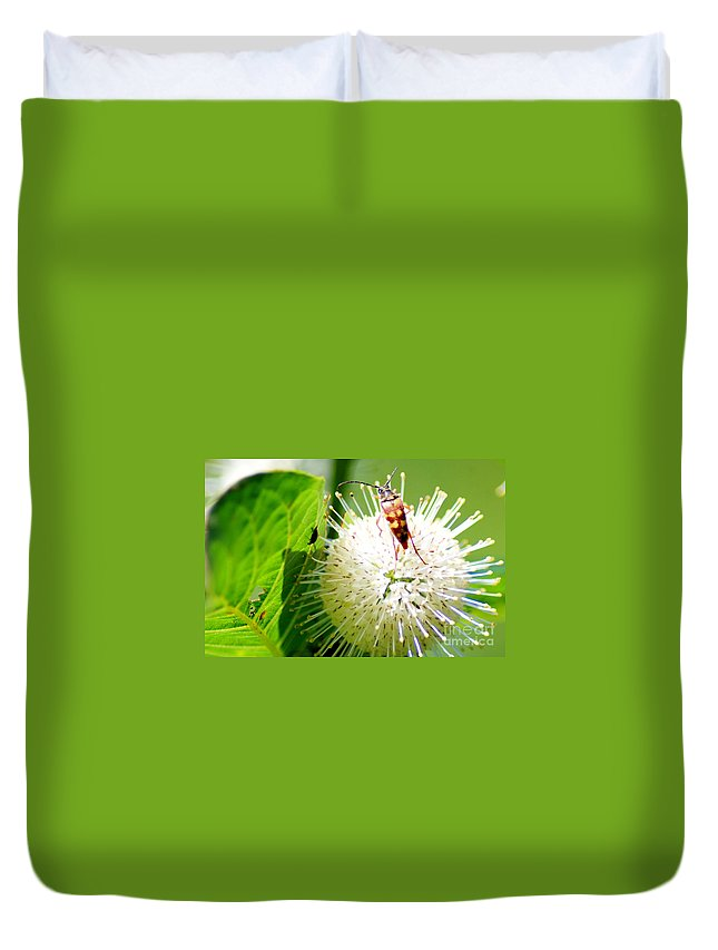 Button Bush Duvet Cover featuring the photograph Beetle On Buttonbush by Optical Playground By MP Ray
