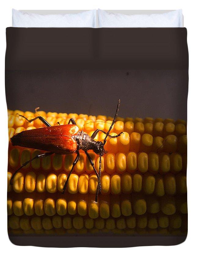 Cumberland Duvet Cover featuring the photograph Beetle on Corn Ear by Douglas Barnett