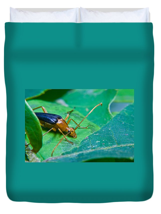 Beetle Duvet Cover featuring the photograph Beetle Sneeking Around by Douglas Barnett
