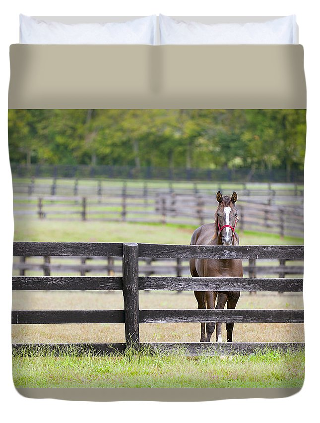 Horse Duvet Cover featuring the photograph Behind Bars by Alexey Stiop
