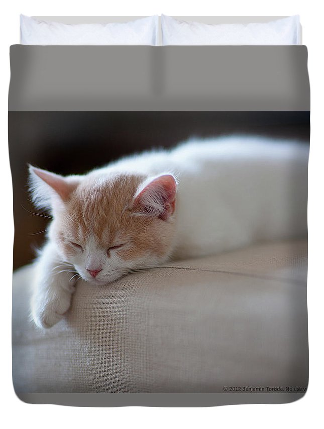 Pets Duvet Cover featuring the photograph Beige And White Kitten Sleeping On by Benjamin Torode