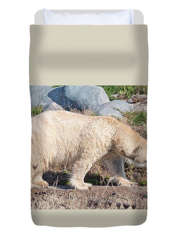 Polar Duvet Cover featuring the photograph Beige Colored Polar Bear by Les Palenik