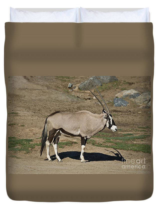 Beisa Oryx Duvet Cover featuring the photograph Beisa Oryx by Anthony Mercieca