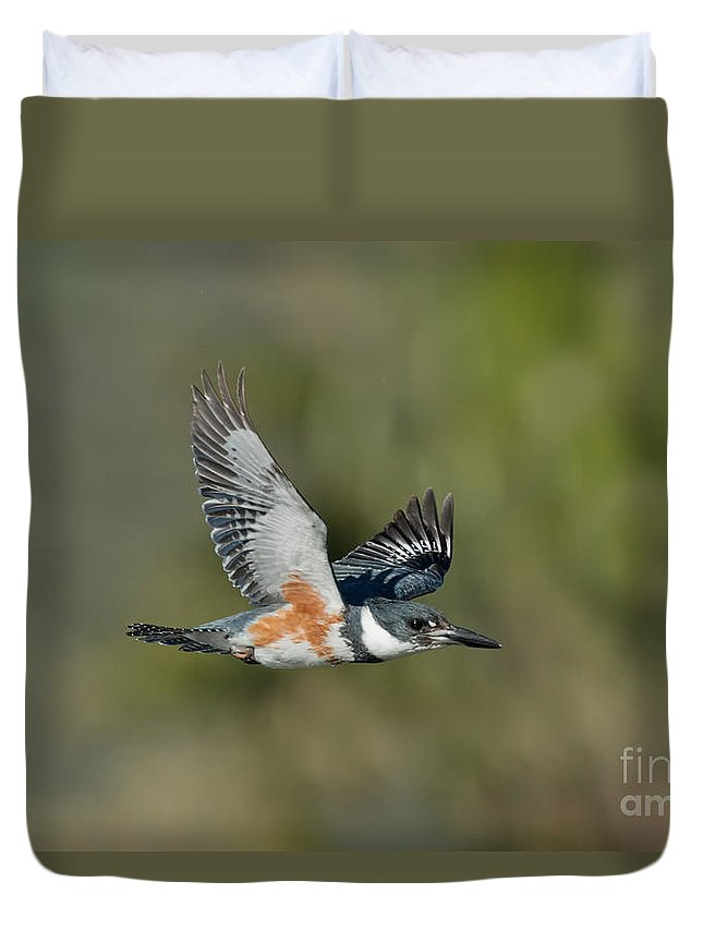 Belted Kingfisher Duvet Cover featuring the photograph Belted Kigfisher Female Flying by Anthony Mercieca