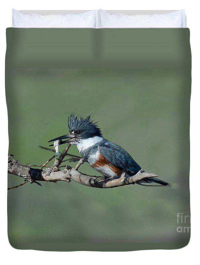 Fauna Duvet Cover featuring the photograph Belted Kingfisher Hen With Fish by Anthony Mercieca