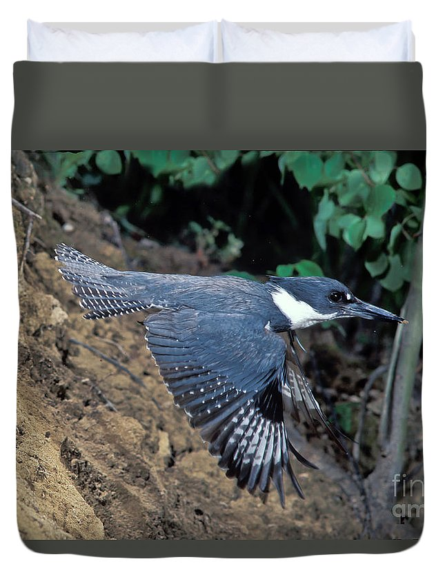 Belted Kingfisher Duvet Cover featuring the photograph Belted Kingfisher Leaving Nest by Anthony Mercieca