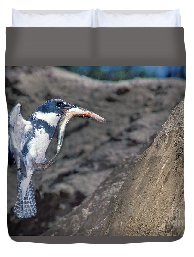Belted Kingfisher Duvet Cover featuring the photograph Belted Kingfisher With Prey by Anthony Mercieca