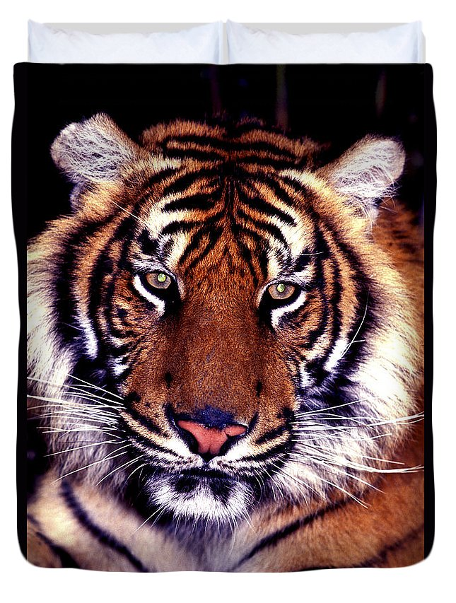 Tiger Duvet Cover featuring the photograph Bengal Tiger Eye To Eye by Paul W Faust - Impressions of Light