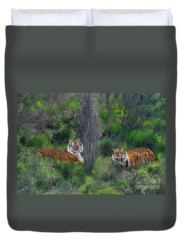 Bengal Tigers Duvet Cover featuring the photograph Bengal Tigers On Grassy Hillside Endangered Species Wildlife Rescue by Dave Welling