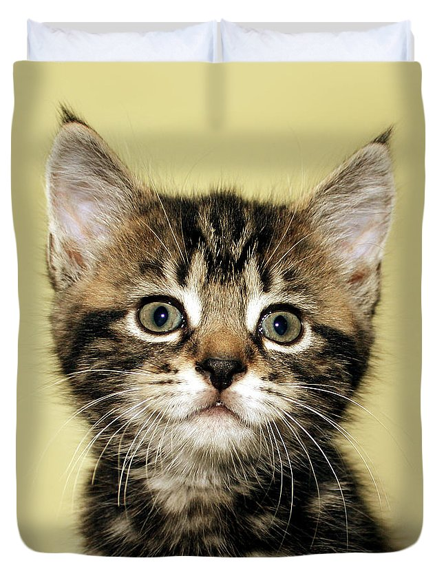 Kitten Duvet Cover featuring the photograph Benny The Pussy Cat by Terri Waters
