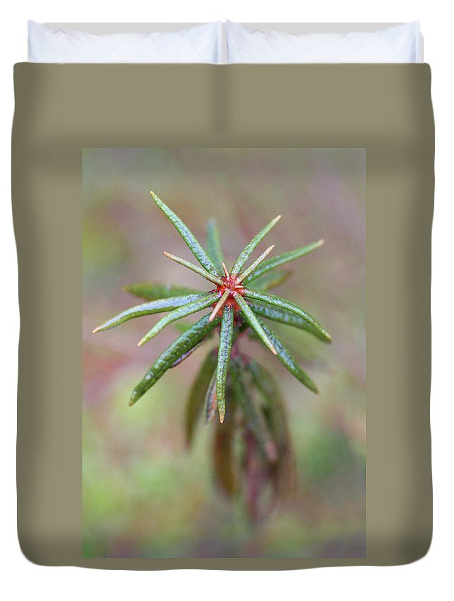 Rhododendron Duvet Cover featuring the photograph Beutifyl Rhododendron by Dreamland Media