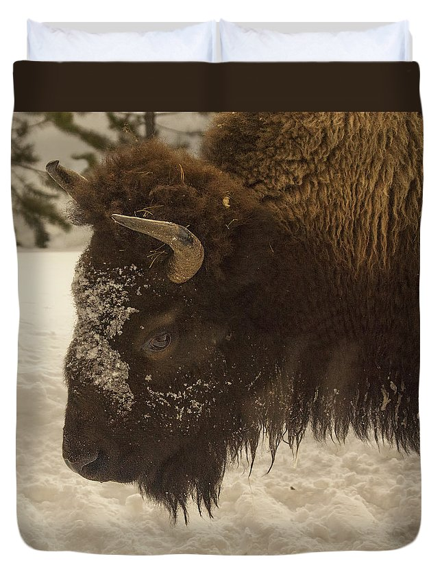 Beware Of The Bison Duvet Cover featuring the photograph Beware Of The Bison by Priscilla Burgers