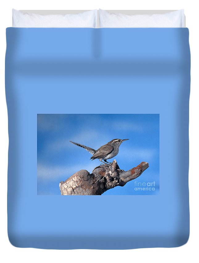 Bird Duvet Cover featuring the photograph Bewicks Wren by Anthony Mercieca