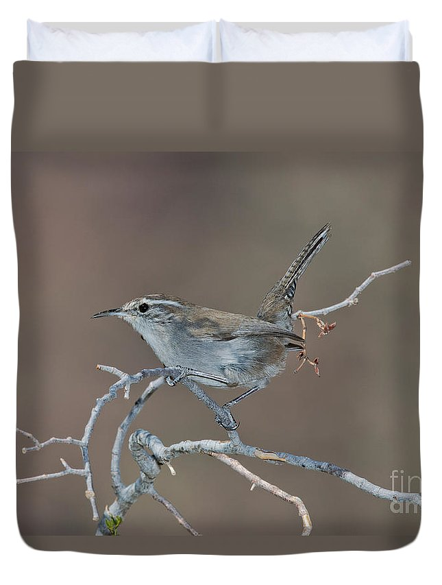 Fauna Duvet Cover featuring the photograph Bewicks Wren In Tree by Anthony Mercieca