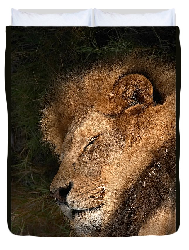 Lion Duvet Cover featuring the photograph Big Cat Nap by Randall Ingalls