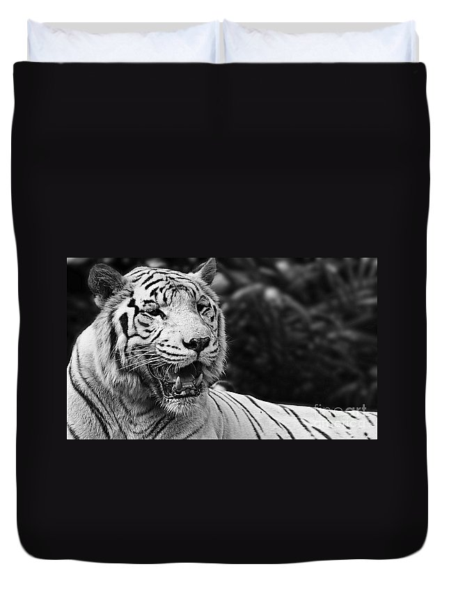 Animals Duvet Cover featuring the photograph Big Cats 3 by Ben Yassa