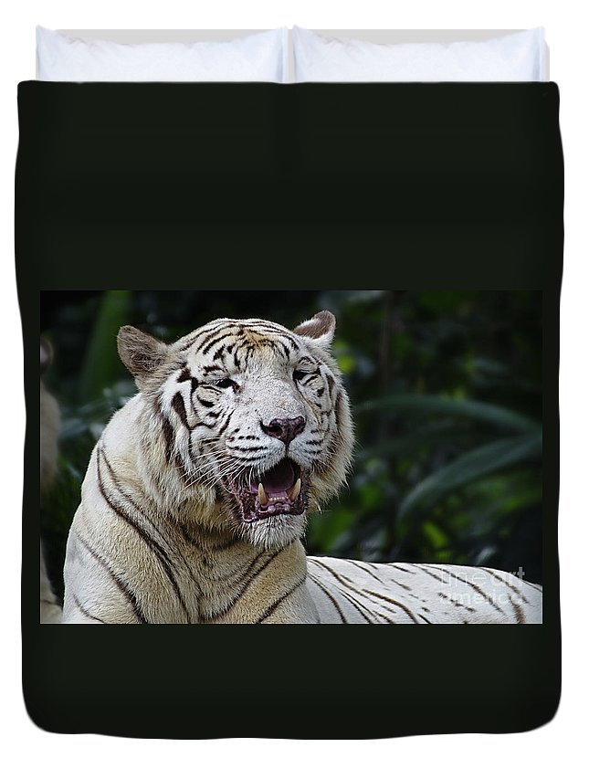 Tiger Duvet Cover featuring the photograph Big Cats 6 by Ben Yassa