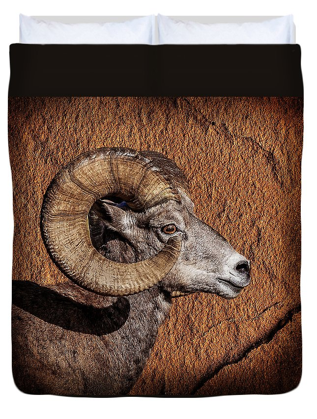 Big Horn Duvet Cover featuring the photograph Big Horn by Wes and Dotty Weber