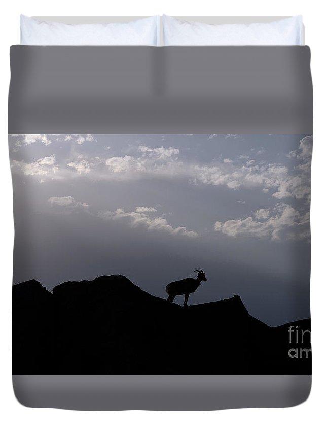 Badlands National Park Duvet Cover featuring the photograph Big Horned Sheep Badlands National Park by Jason O Watson