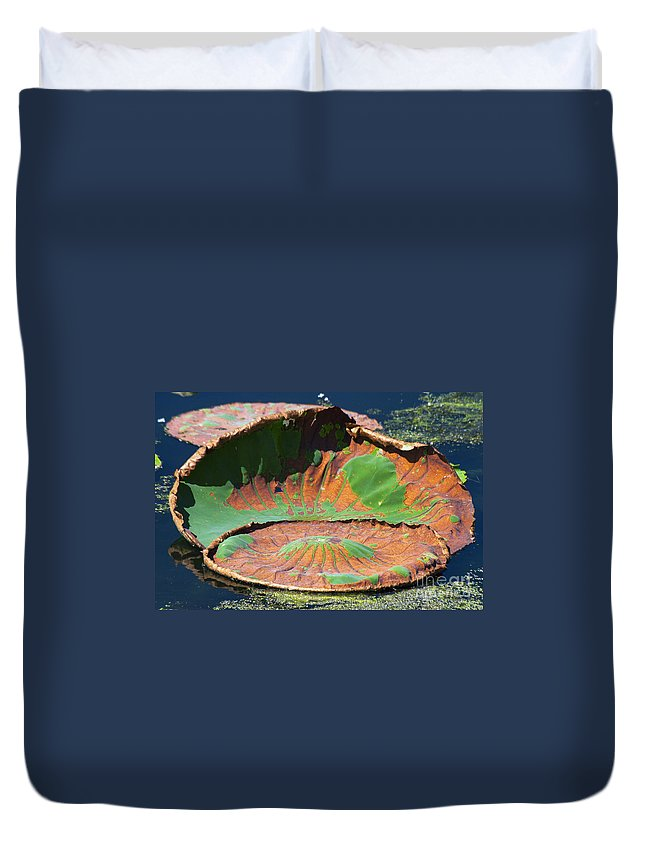 Black Bayou Lake National Wildlife Refuge Monroe Louisiana Colored Lily Pads Large Big Pad Water Still Life Nature Duvet Cover featuring the photograph Big Pad by Bob Phillips
