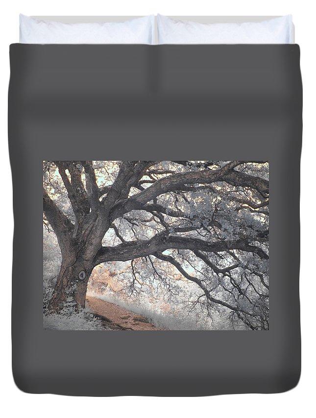 Designs Similar to Big Sur Oak by Jane Linders