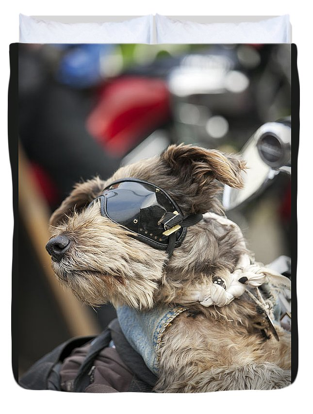 Biker Dog Duvet Cover featuring the photograph Biker Dog by Gillian Dernie